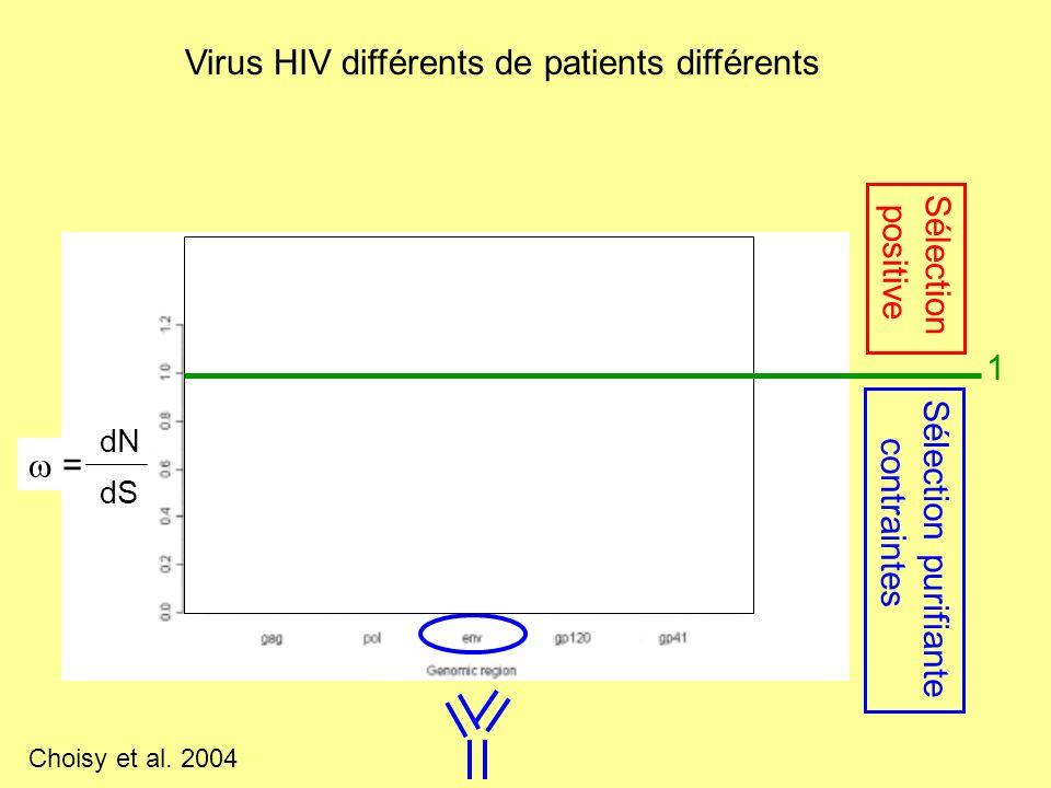Virus HIV différents de patients différents