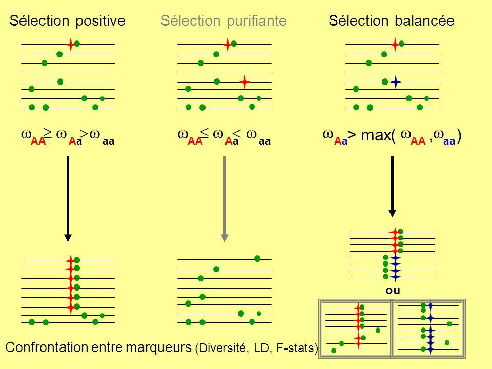 > max( , ) w  w > w  w < w Sélection positive