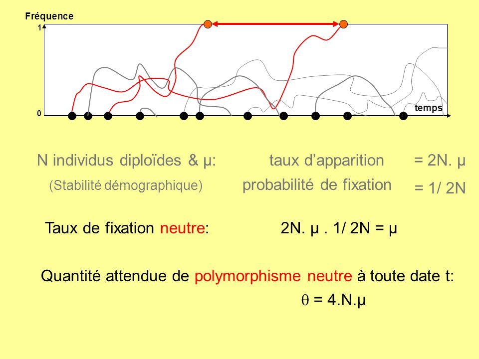 N individus diploïdes & µ: taux d'apparition probabilité de fixation