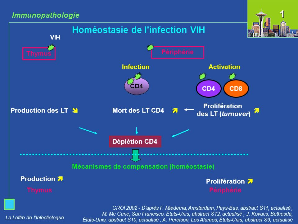Homéostasie de l'infection VIH
