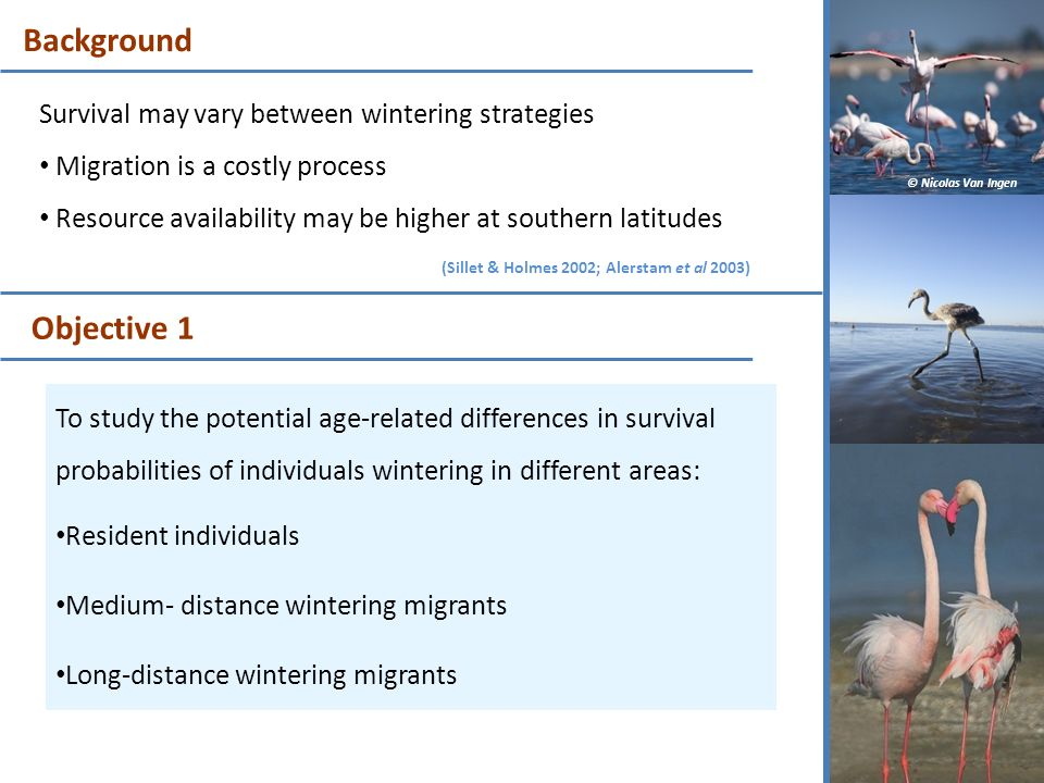 Background Objective 1 Survival may vary between wintering strategies