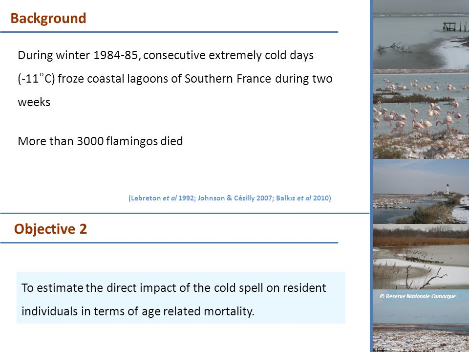Background During winter 1984-85, consecutive extremely cold days (-11°C) froze coastal lagoons of Southern France during two weeks.
