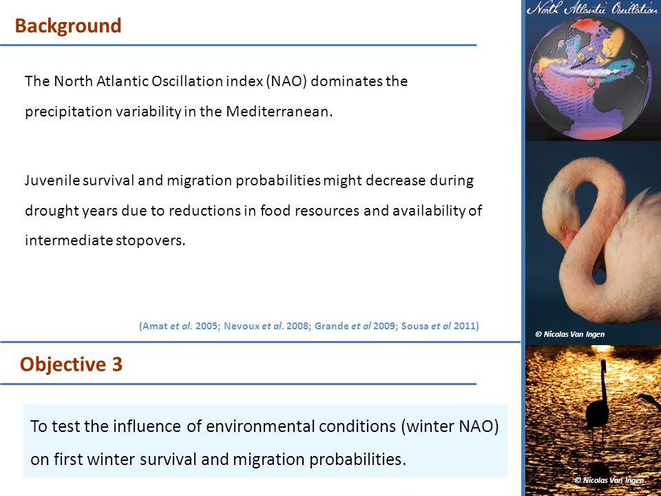 Background The North Atlantic Oscillation index (NAO) dominates the precipitation variability in the Mediterranean.