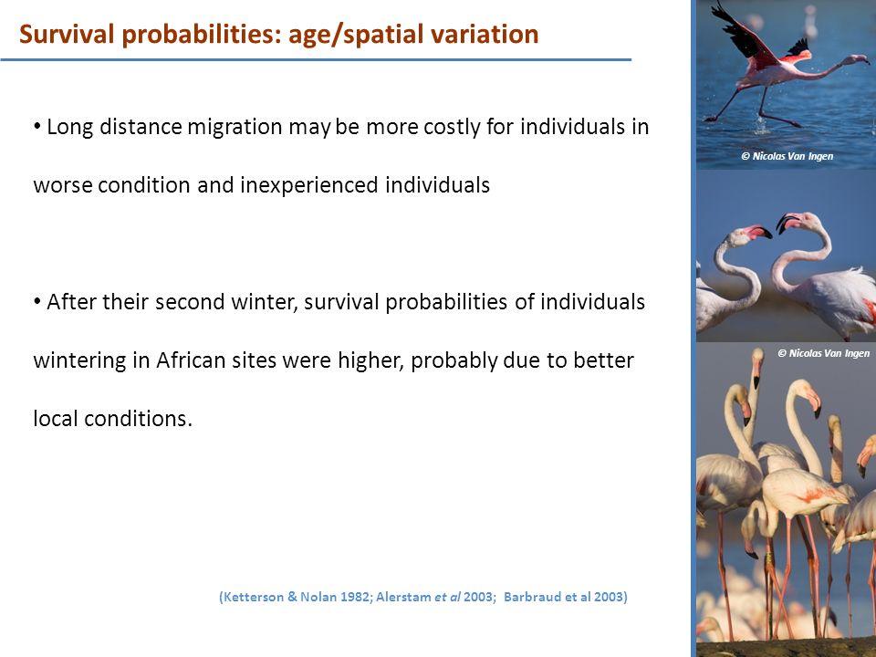 Survival probabilities: age/spatial variation
