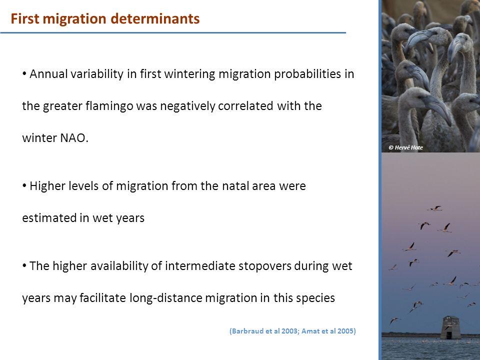 First migration determinants