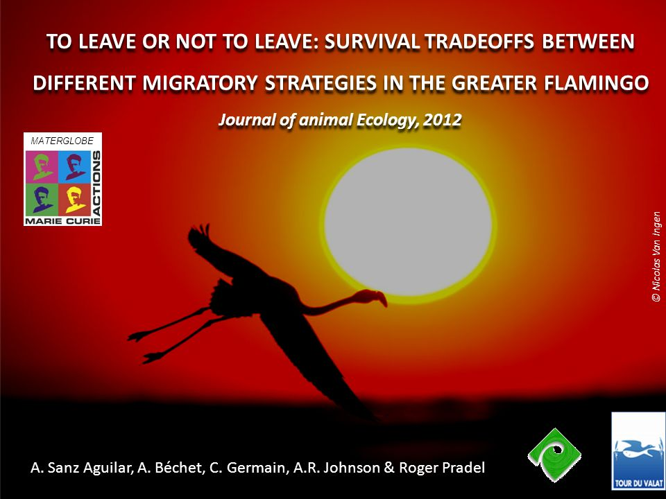 TO LEAVE OR NOT TO LEAVE: SURVIVAL TRADEOFFS BETWEEN DIFFERENT MIGRATORY STRATEGIES IN THE GREATER FLAMINGO Journal of animal Ecology, 2012