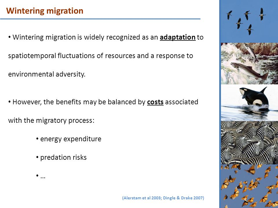 Wintering migration