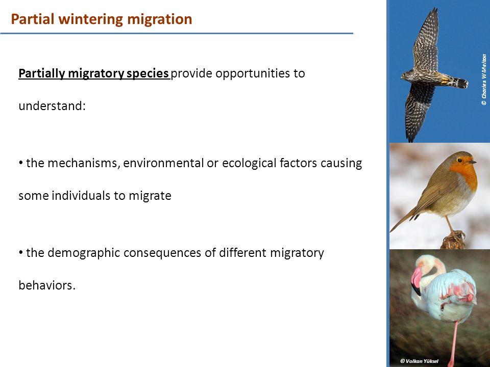 Partial wintering migration