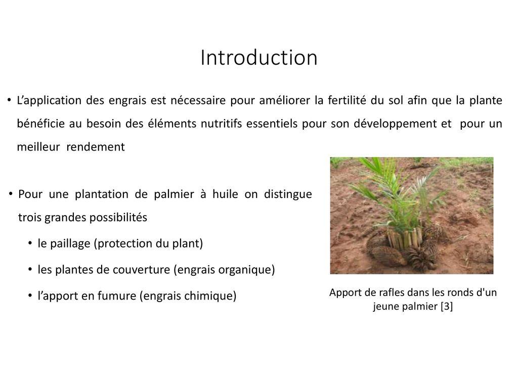 Production des r gimes de palmier huile ppt t l charger - Engrais pour palmier ...