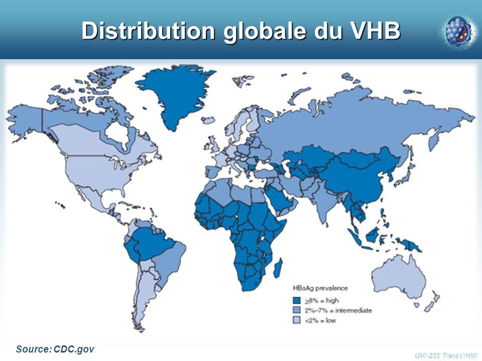 Distribution globale du VHB