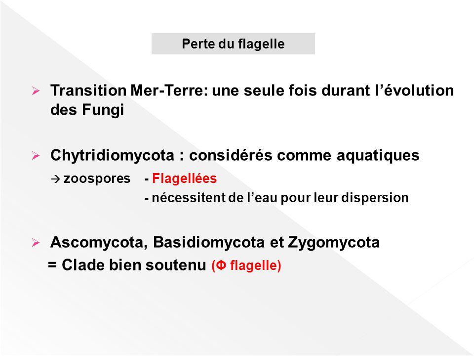 Transition Mer-Terre: une seule fois durant l'évolution des Fungi