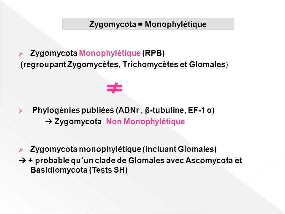 Zygomycota = Monophylétique