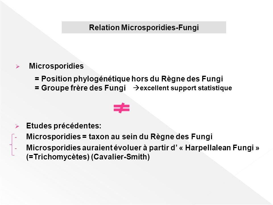 Relation Microsporidies-Fungi