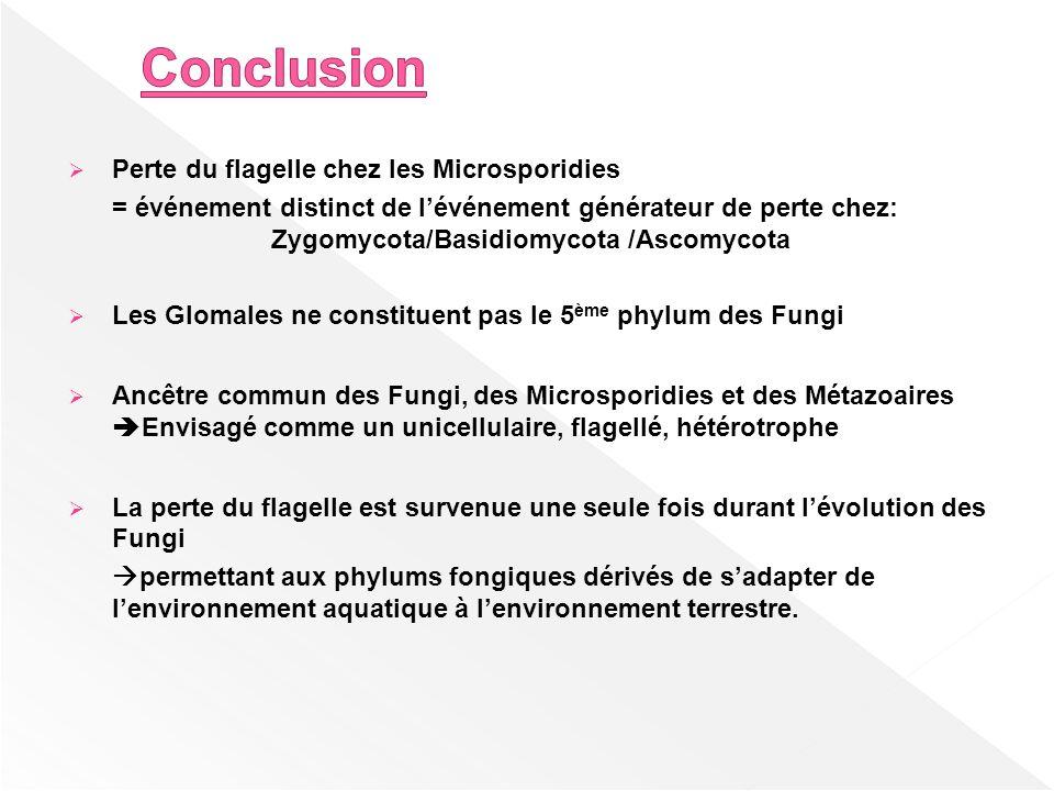 Conclusion Perte du flagelle chez les Microsporidies