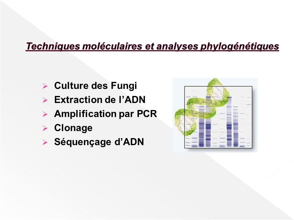 Techniques moléculaires et analyses phylogénétiques