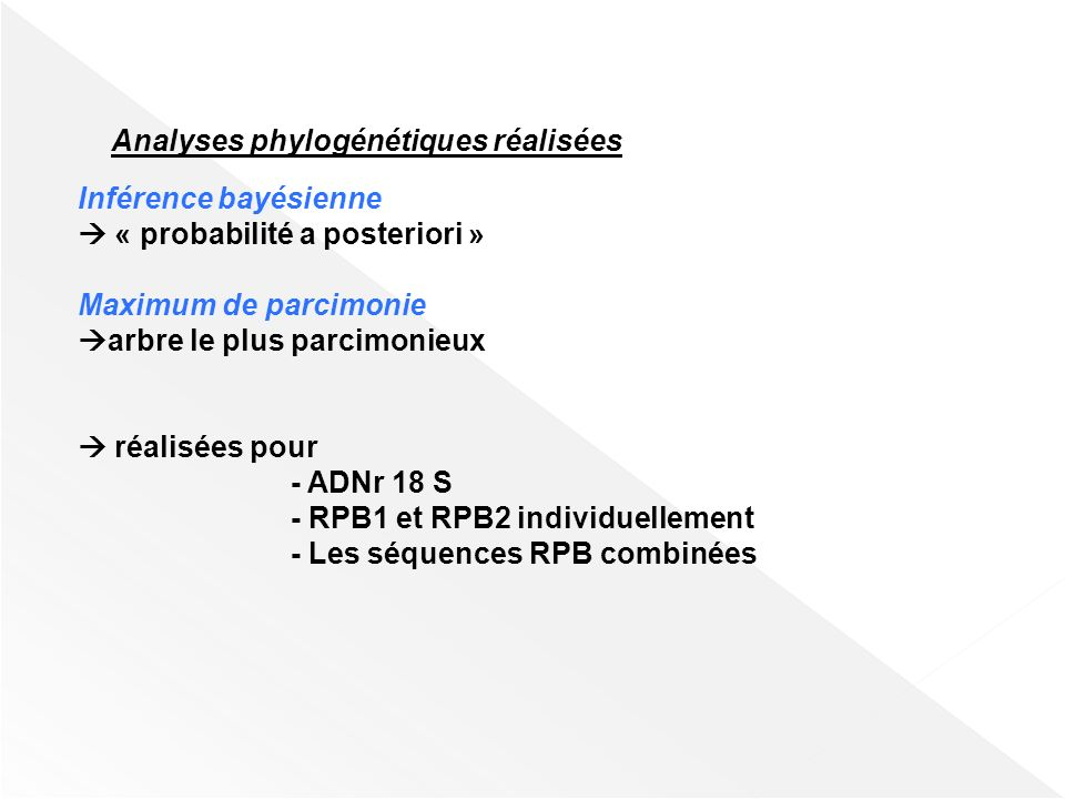 Analyses phylogénétiques réalisées