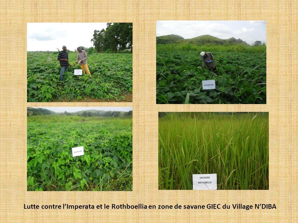 Lutte contre l'Imperata et le Rothboellia en zone de savane GIEC du Village N'DIBA