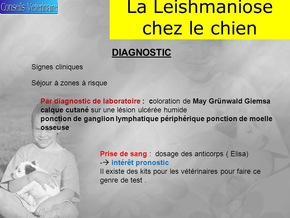 La Leishmaniose chez le chien