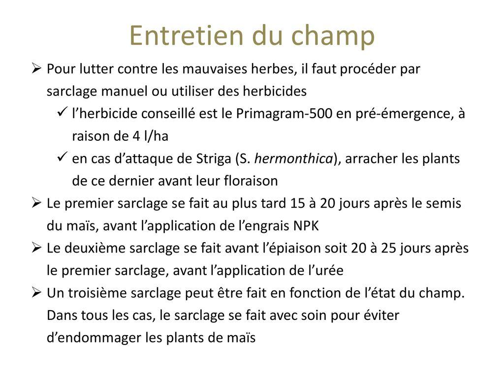 Gestion de la fertilit et conservation de l humidit du - Faut il couper les jonquilles apres floraison ...