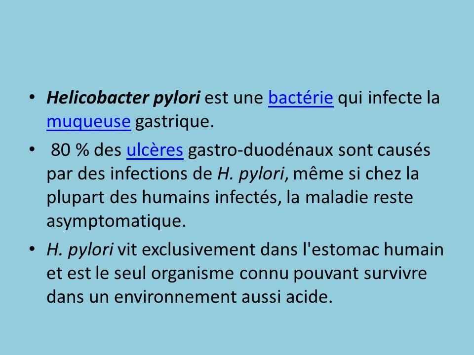 Helicobacter pylori est une bactérie qui infecte la muqueuse gastrique.