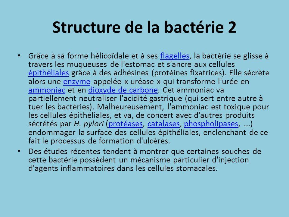 Structure de la bactérie 2