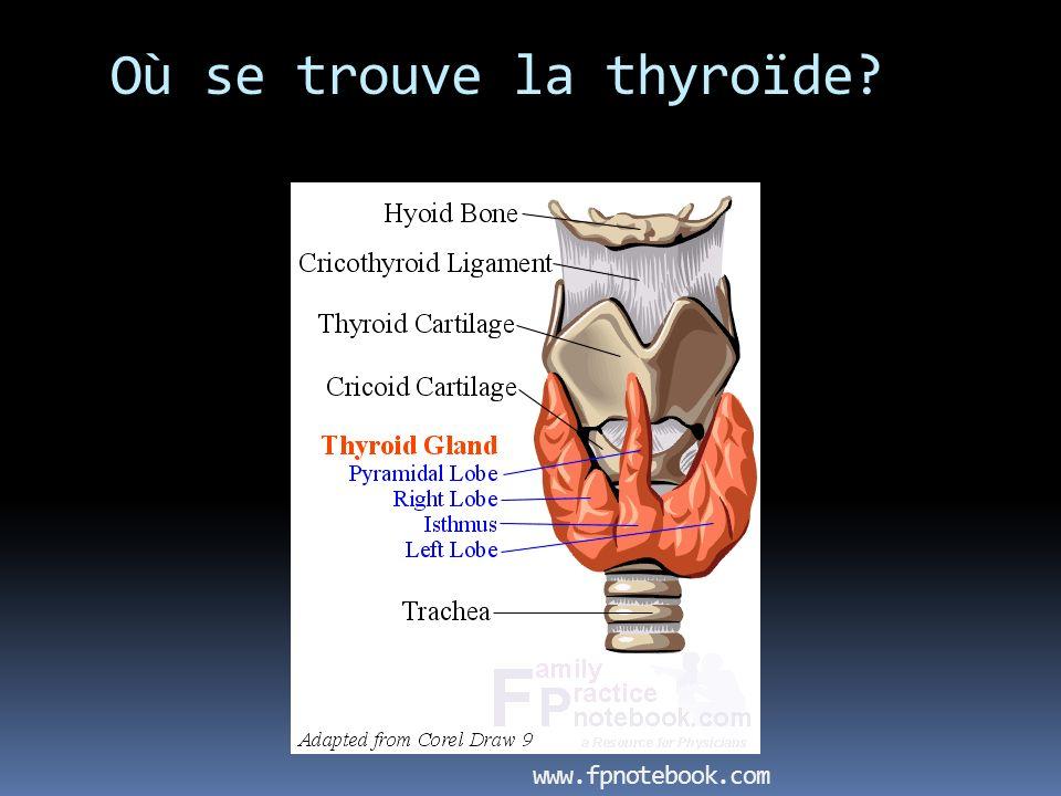 Où se trouve la thyroïde