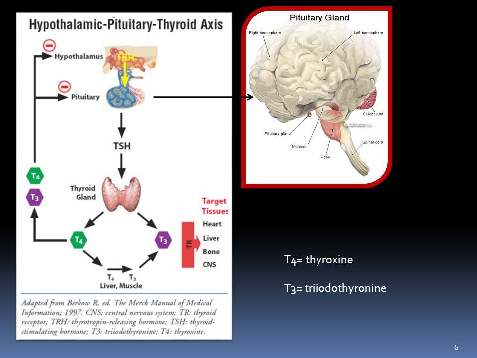 T4= thyroxine T3= triiodothyronine