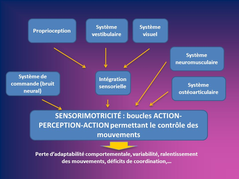 Proprioception Système vestibulaire. Système visuel. Système neuromusculaire. Système de commande (bruit neural)