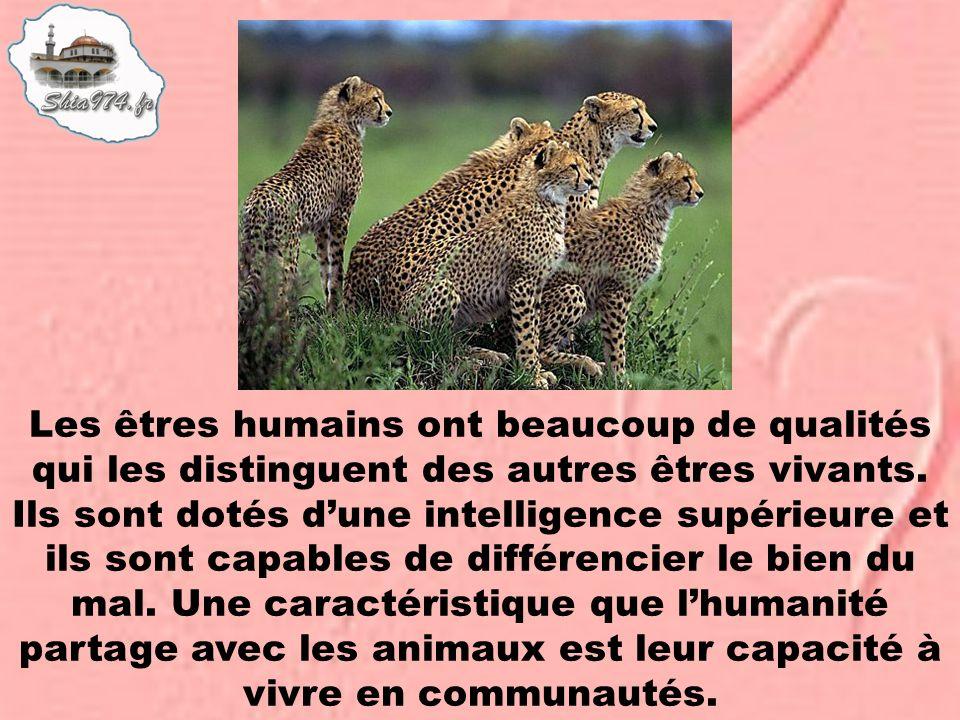 Les êtres humains ont beaucoup de qualités qui les distinguent des autres êtres vivants.