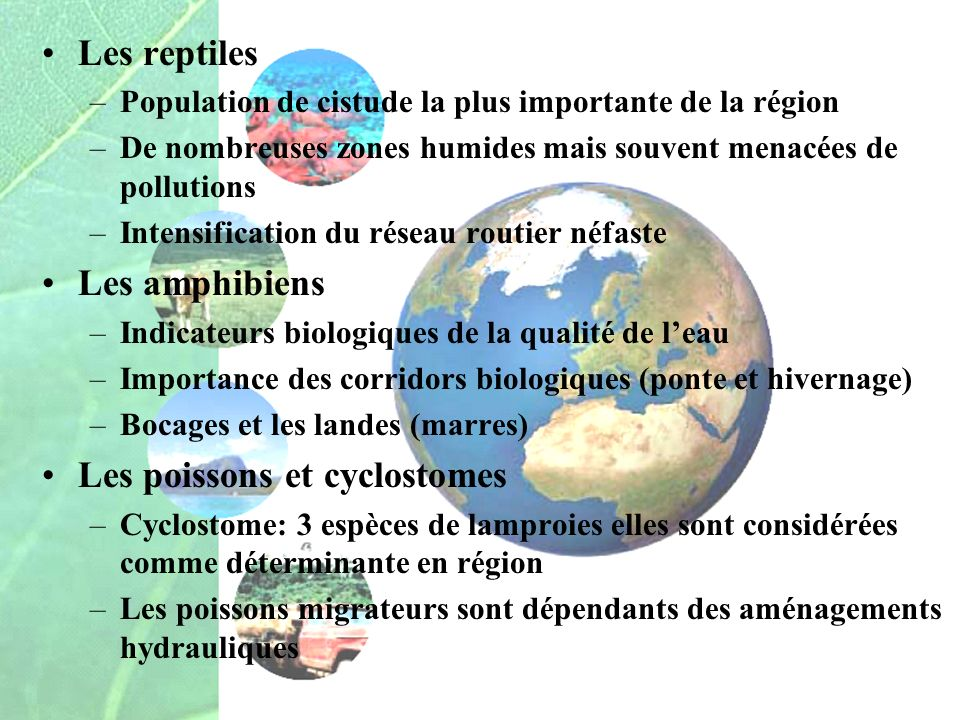 Les poissons et cyclostomes