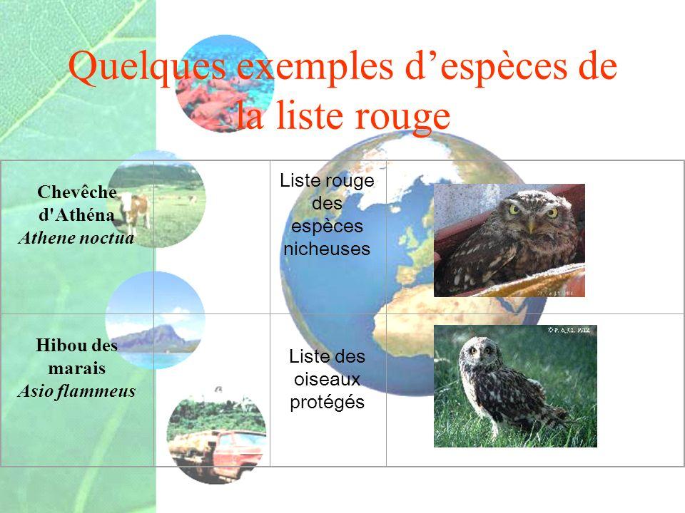 Quelques exemples d'espèces de la liste rouge
