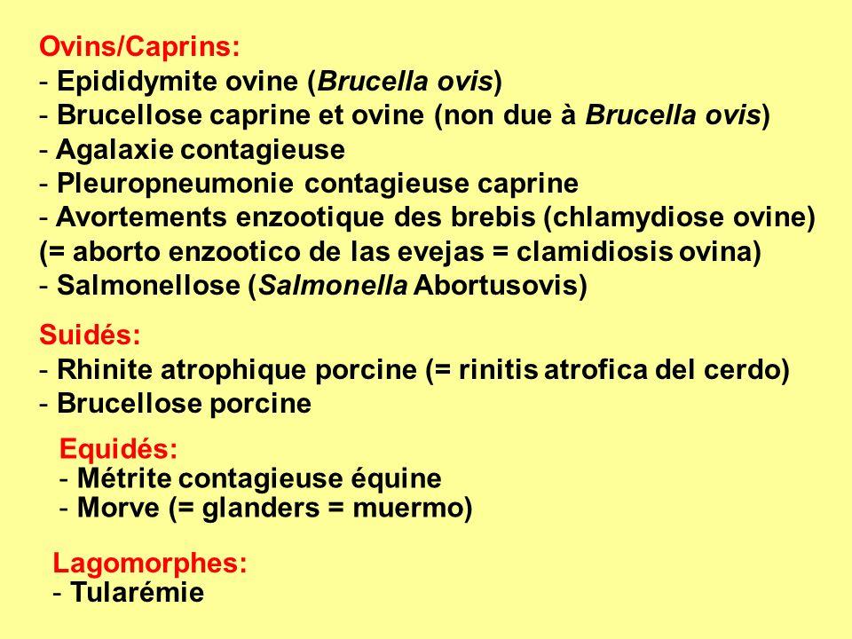 Ovins/Caprins: Epididymite ovine (Brucella ovis) Brucellose caprine et ovine (non due à Brucella ovis)