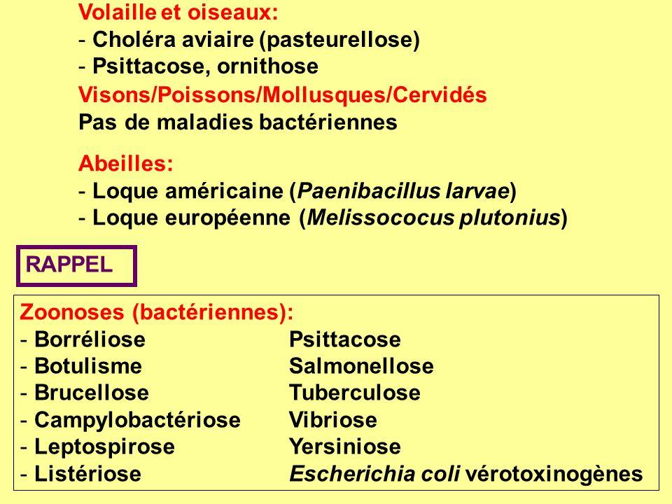 Volaille et oiseaux: Choléra aviaire (pasteurellose) Psittacose, ornithose. Visons/Poissons/Mollusques/Cervidés.