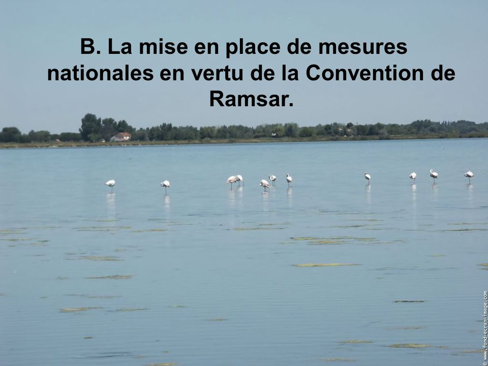 B. La mise en place de mesures nationales en vertu de la Convention de Ramsar.