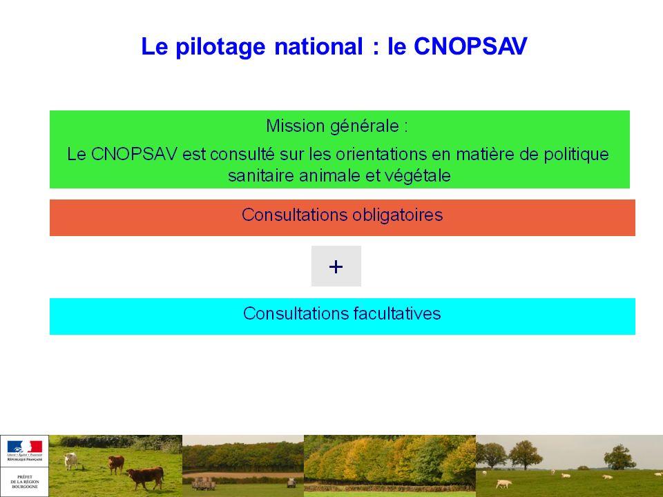 Le pilotage national : le CNOPSAV