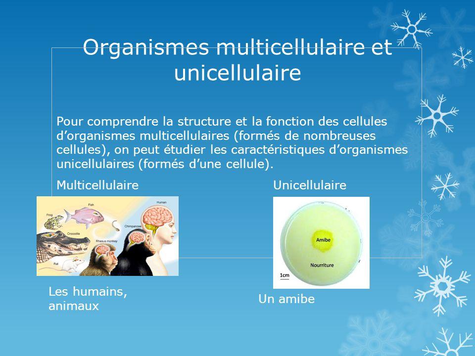 Organismes multicellulaire et unicellulaire