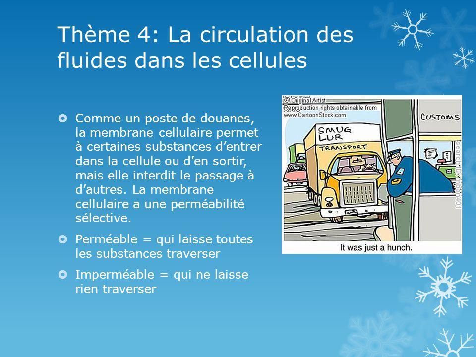 Thème 4: La circulation des fluides dans les cellules