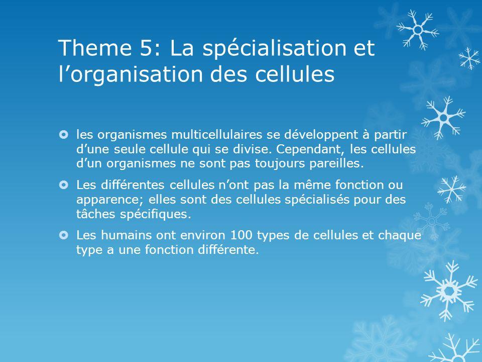 Theme 5: La spécialisation et l'organisation des cellules