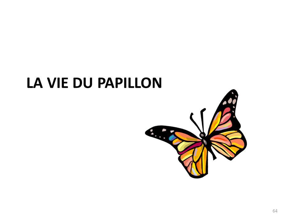 LA vie du papillon