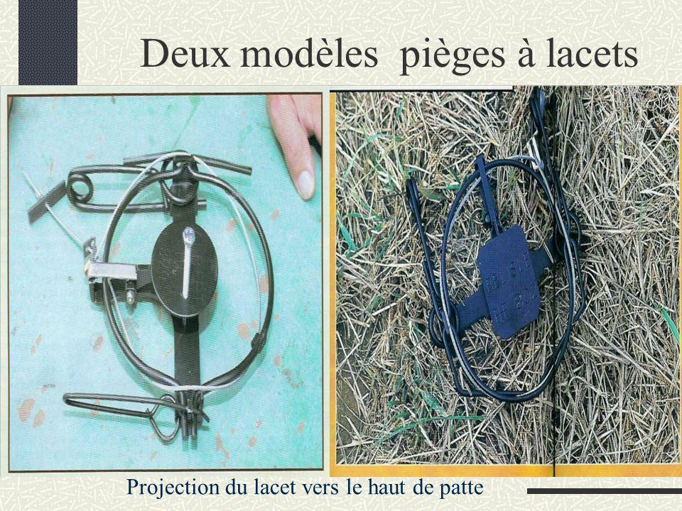 Deux modèles pièges à lacets