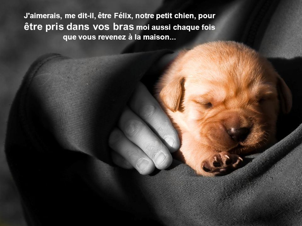 J aimerais, me dit-il, être Félix, notre petit chien, pour être pris dans vos bras moi aussi chaque fois que vous revenez à la maison...