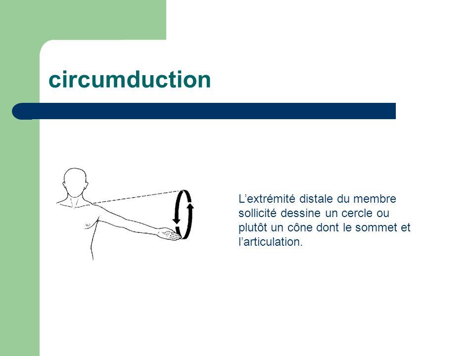 circumduction L'extrémité distale du membre sollicité dessine un cercle ou plutôt un cône dont le sommet et l'articulation.