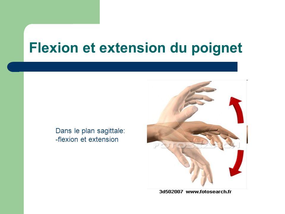 Flexion et extension du poignet