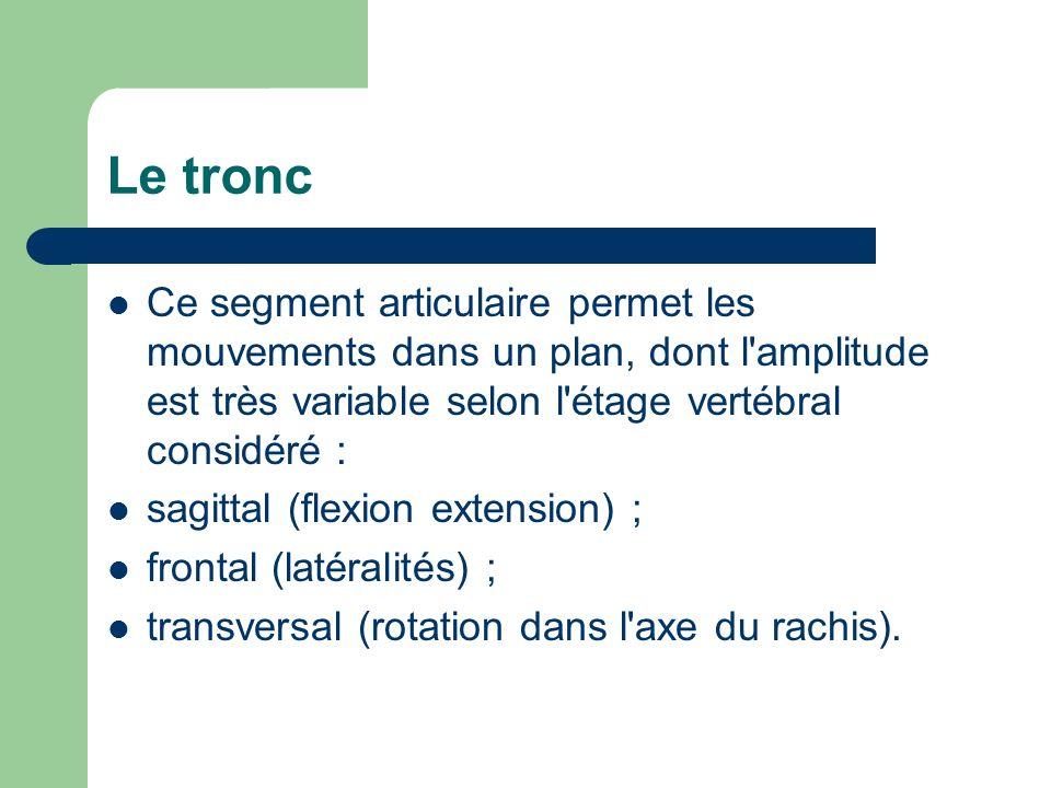 Le tronc Ce segment articulaire permet les mouvements dans un plan, dont l amplitude est très variable selon l étage vertébral considéré :