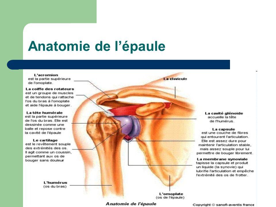 Anatomie de l'épaule