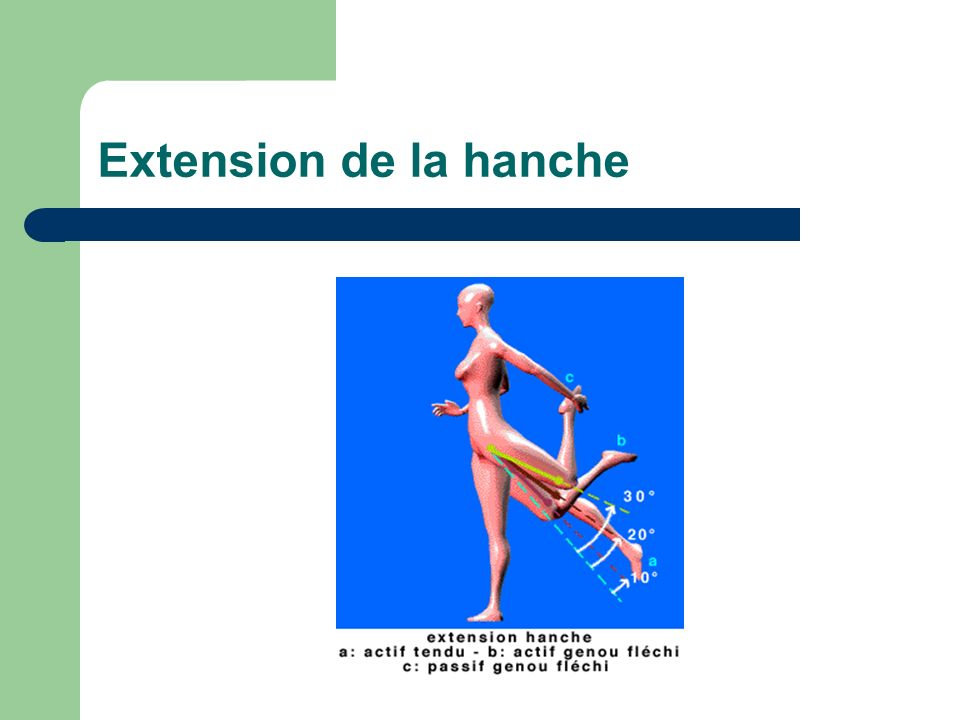 Extension de la hanche