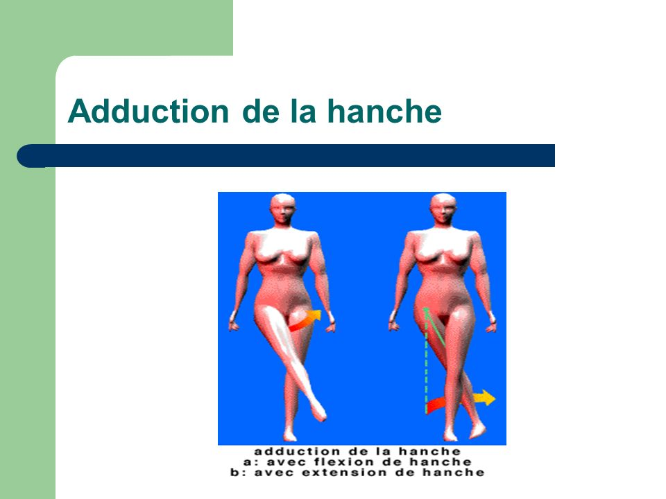Adduction de la hanche