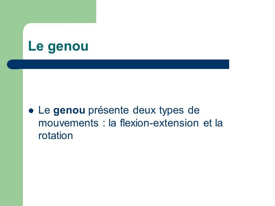 Le genou Le genou présente deux types de mouvements : la flexion-extension et la rotation