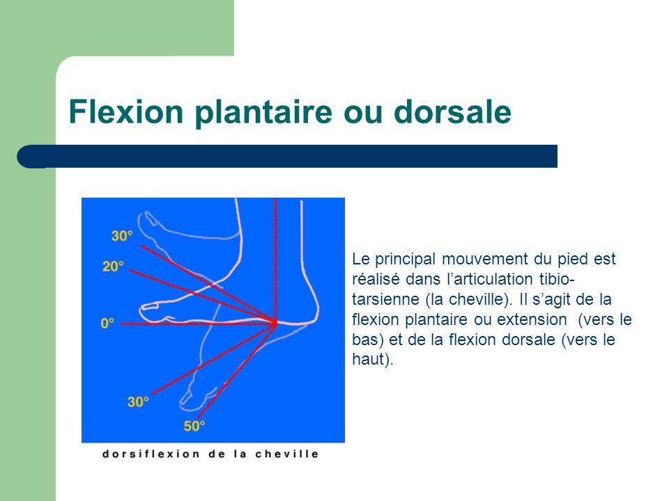 Flexion plantaire ou dorsale