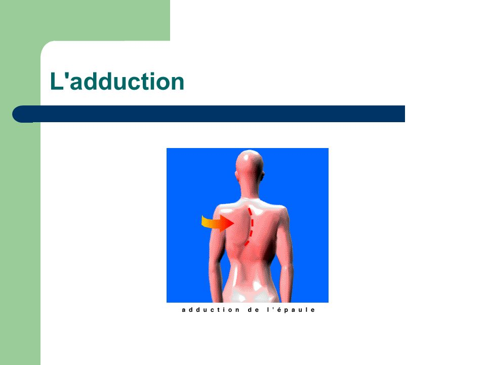L adduction